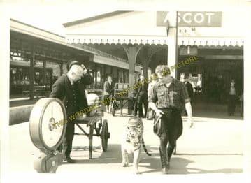 Ascot & Sunninghill Railway Station Photo. Bracknell - Sunningdale. L&SWR (14)