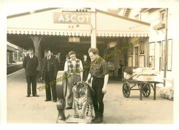 Ascot & Sunninghill Railway Station Photo. Bracknell - Sunningdale. L&SWR (16)