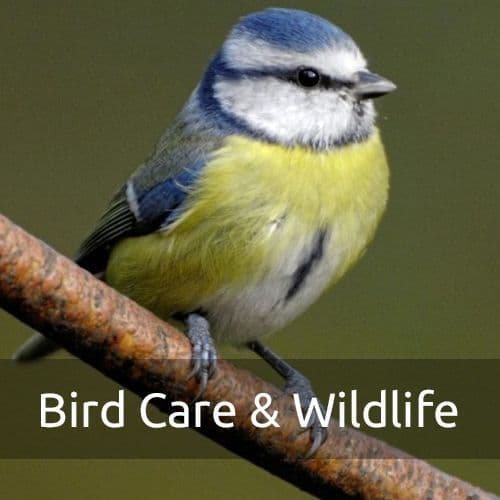 Bird Care & Wildlife
