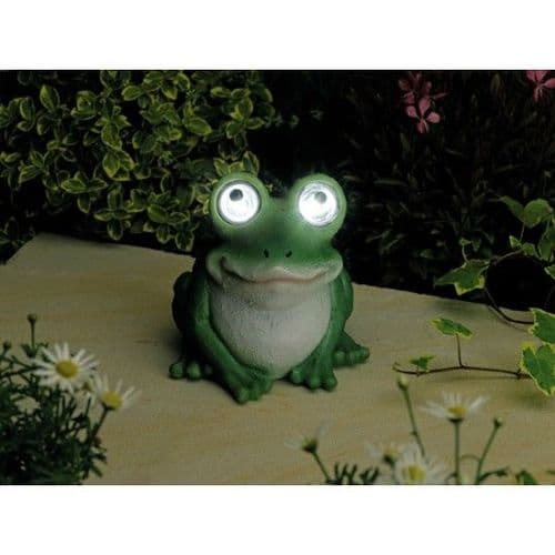 Solar Bright Eyed Frog
