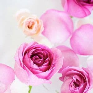 Rose Damas Bio
