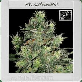 Auto AK  - Feminized - Female Seeds